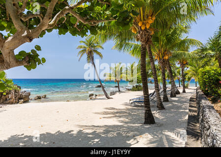 Palm trees and a stone wall line the beautiful sandy beach at Lighthouse Point near the Meridian Resort in Roatan, Honduras.