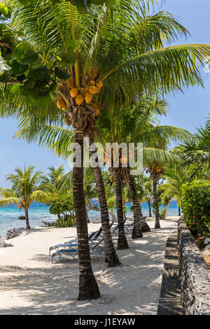 Coconut palm trees and a stone wall line the beautiful sandy beach at Lighthouse Point near the Meridian Resort - Stock Photo