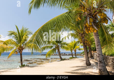 Coconut palm trees line the beautiful sandy beach and coral reef at Lighthouse Point near the Meridian Resort in - Stock Photo