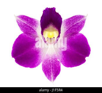Orchid flower isolated on white background, , purple color. - Stock Photo