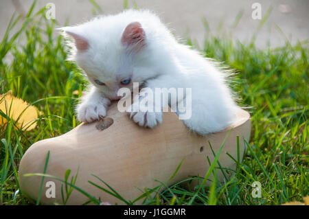 White little cat in a wooden shoe - Stock Photo