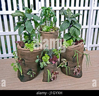 Concept gardening 'grow your own' and save the enviornment - Stock Photo