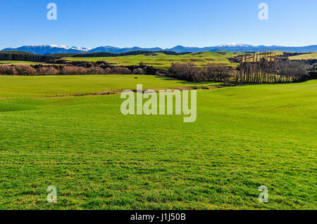 Typical green rural landscape in the Southern Scenic Route, New Zealand - Stock Photo