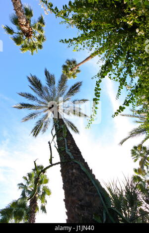 Towering trees and plants shoot up and out against a blue sky - Stock Photo