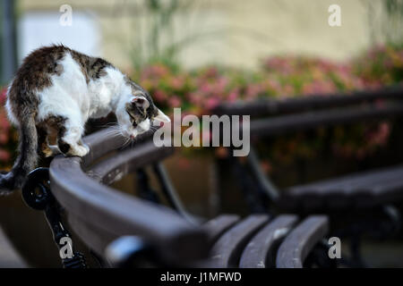 Speckled cat sits in the park on the back of a chair. - Stock Photo