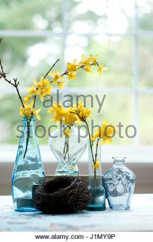 Forsythia Branches In Blue Glass Vase Stock Photo 281414839 Alamy