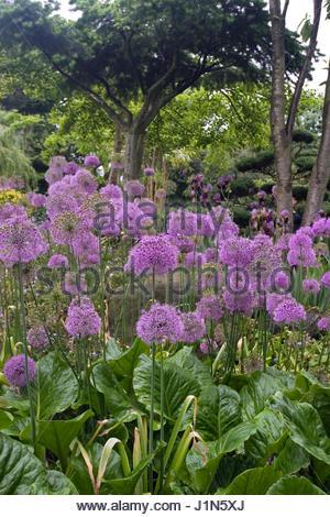 Purple Garden Relaxation Centre