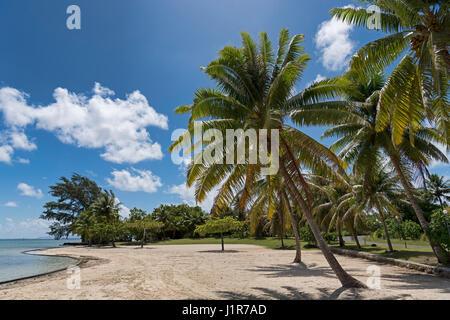 Palm trees on the beach in front of Marae Taputapuatea, Raiatea, French Polynesia - Stock Photo