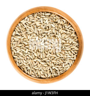 Rye grains in wooden bowl. Secale cereale, grain, cover and forage crop. Used for flour, bread, beer, whiskey, vodka - Stock Photo