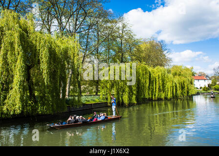 Punting on a river in Cambridge England UK - Stock Photo