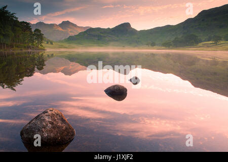 Pink dawn light, illuminating the Langdale Pikes, reflected in the calm water of Blea Tarn. A light chill mist sits - Stock Photo