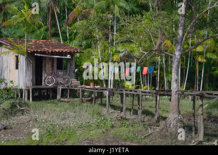 A traditional wooden stilted dwelling on the banks of the river Guama near Belem, Para, Brazil, with acai palms - Stock Photo