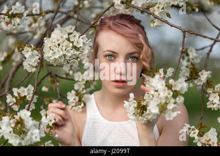Young woman in cherry blossoms, portrait - Stock Photo