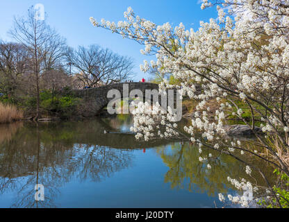 Spring in New York Central Park, Gapstow Bridge - Stock Photo