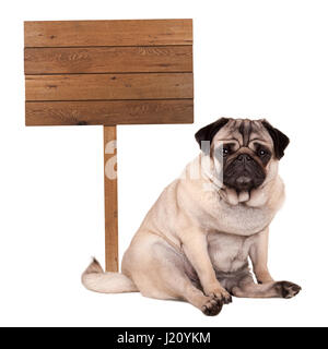 lovely cute pug puppy dog sitting down next to blank wooden sign on pole, isolated on white background - Stock Photo