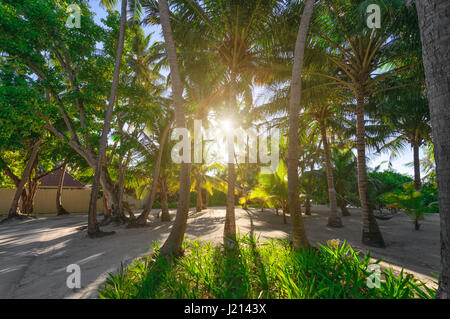 Palm trees with sunset shining through - Stock Photo