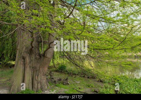 Lanscape photo of St. James Park. April 2017. London, United Kingdom - Stock Photo