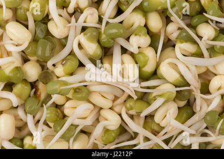 Pea seeds with sprouts close up macro shot top view - Stock Photo