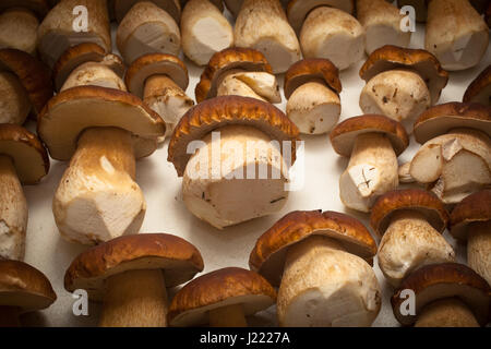 Porcini - Stock Photo