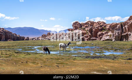 Llamas in Bolivean altiplano with rock formations on background - Potosi Department, Bolivia - Stock Photo