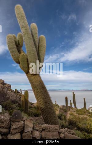 Incahuasi Cactus Island in Salar de Uyuni salt flat - Potosi Department, Bolivia - Stock Photo