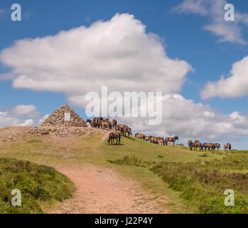 An Unusually Large Gathering of Wild Exmoor Ponies, Dunkery Beacon, Exmoor National Park, England - Stock Photo