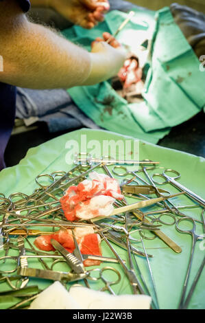 surgical instruments and bloody swabs during a veterinary operation - Stock Photo