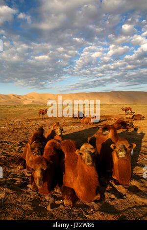 Light and shade on sand dunes in Gobi Desert Khongoryn Els Gurvan Saikhan National Park Mongolia