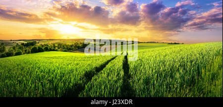Vast green field at gorgeous sunset, a colorful panoramic landscape - Stock Photo