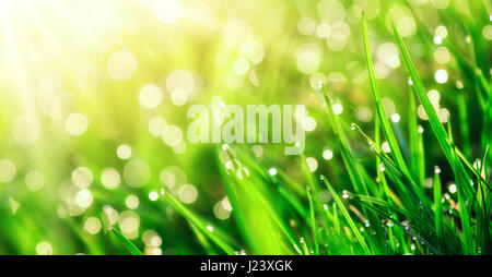 Grass closeup with dew drops in warm sunlight, with shallow focus and backlight for beautiful bokeh effect in the - Stock Photo