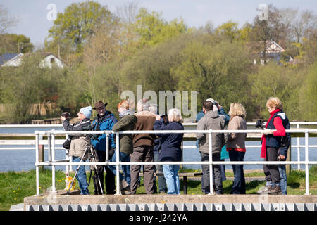 A group of birdwatchers using binoculars and telescopes to watch birds at a  lake in the UK - Stock Photo