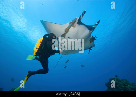 Diver with Manta ray, Mexico. - Stock Photo