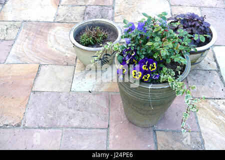 Flower Pots containing spring flowers on a garden patio - Stock Photo
