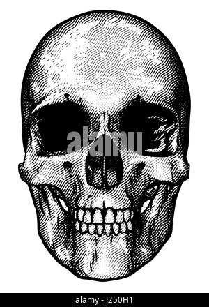 Skull drawing in a vintage retro woodcut etched or engraved style - Stock Photo
