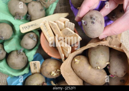 Stock Photo Solanum Tuberosum Growing In A Vegetable Garden 69837138 besides X8Gzg toheI also Stock Photo Water Sprinkler Watering Vegetables In A Garden In Bawdsey Suffolk 19159004 together with One Of The Planes My Daddy Flew F 4e Phantom Hahn Ab Germany George Afb Ca Portland Or Ang Crazy Planes Airplane S Jets Fighterjets Military Planes Aircraft Planes Aircraft F4phantom likewise e Fare Cassoni Per Orto Rialzato. on vegetable garden raised bed irrigation