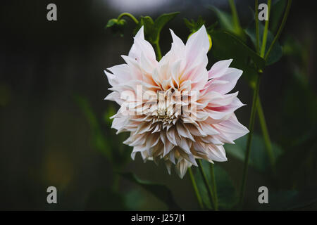 flowers and blossoms in summertime - Stock Photo