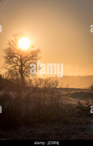 A beautiful morning landscape, a soft cold spring sun disperses the fog over the frozen grass - Stock Photo