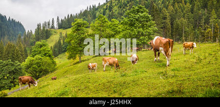 Beautiful view of cows grazing in idyllic alpine mountain scenery with high mountain peaks covered in mystic fog - Stock Photo