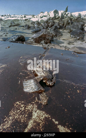 A dead endangered Socotra cormorant covered in crude oil on an oil soaked beach after Iraqi forces intentionally - Stock Photo