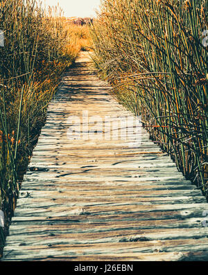 A walking path through tall grass in Table Mountain National Park in Cape Town, South Africa - Stock Photo