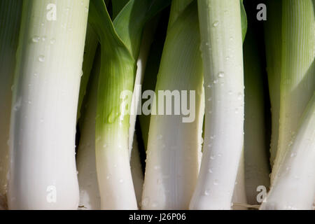 Freshly harvested leeks from a garden - Stock Photo