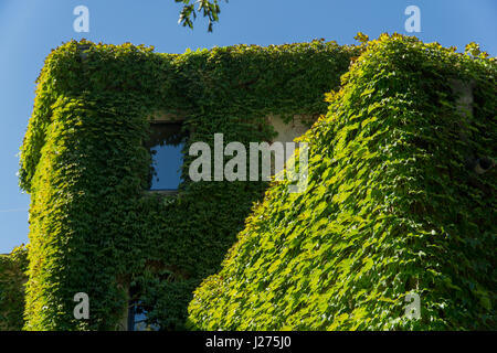 House, overgrown wild grapes in the old town. Tbilisi, Georgia. - Stock Photo