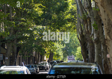 Tbilisi, Georgia-SEP 25, 2016: Green Street with tall trees in the city center. - Stock Photo