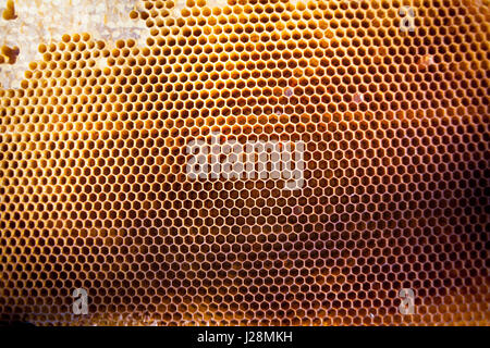 Background texture and pattern of a section of wax honeycomb - Stock Photo