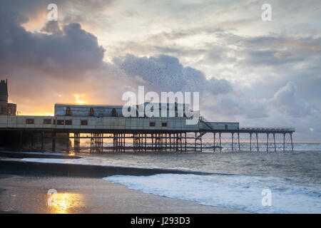 Starlings  flock  flying over Aberystwyth pier at sunset  winter  Aberystwyth, Wales, UK - Stock Photo