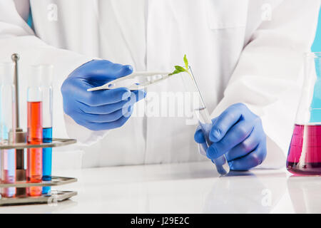 Plant sciences in lab - Stock Photo