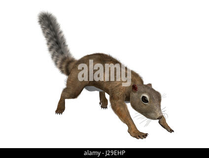3D rendering of a Gambian sun squirrel isolated on white background - Stock Photo