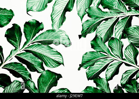 Green leaf pattern on white background - Stock Photo