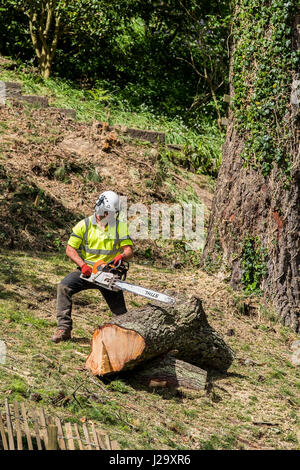 Tree surgeon Arboriculture Chainsaw Cutting Manual worker Protective workwear Equipment Workers Industrial Equipment - Stock Photo
