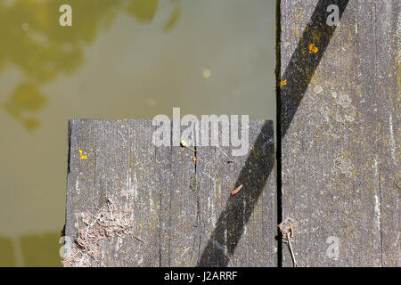 Old wooden bridge foot plank covered in lichen and moss and green water background - Stock Photo